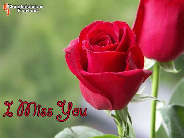 Lovely Quotes For You: I Miss You in Cute Rose Flower New Images 2013
