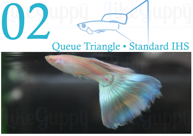 guppy-queue-triangle-standard-ihs