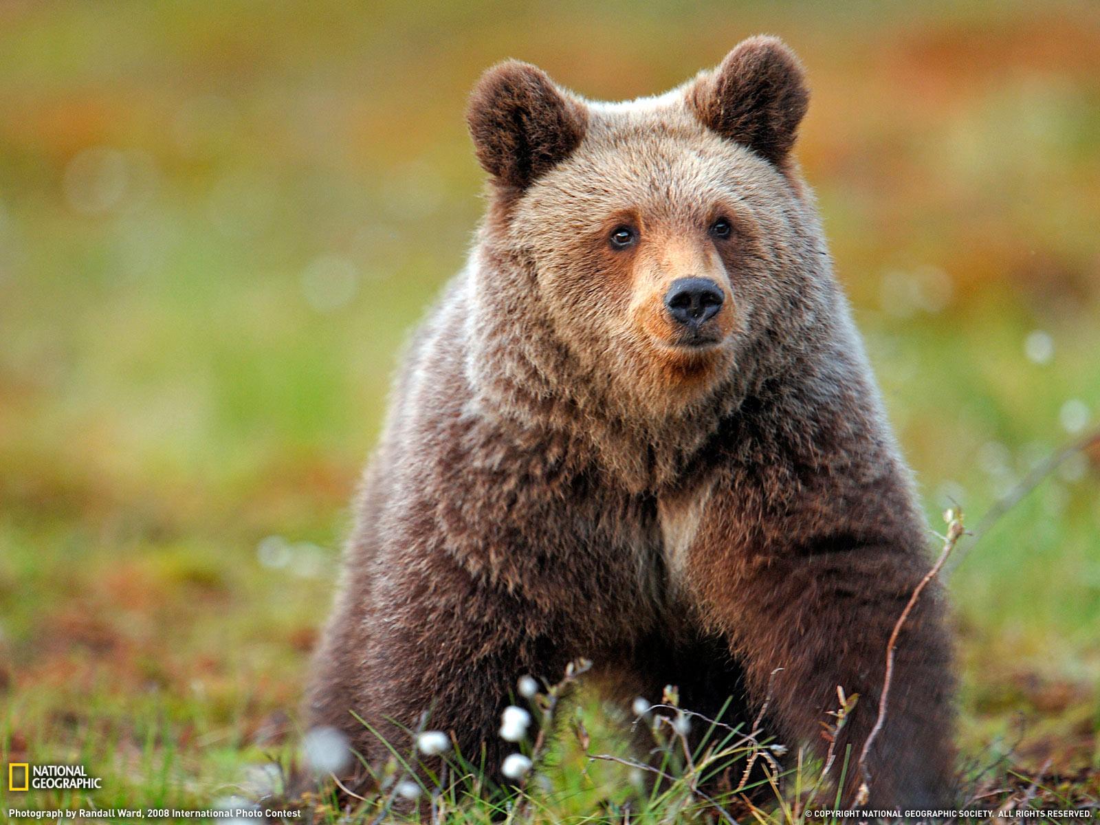 Veganismo racional debemos intervenir en la naturaleza - National geographic wild wallpapers ...