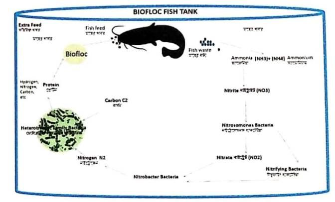 Biofloc (बायॉफ्लोक) टैंक की Structure