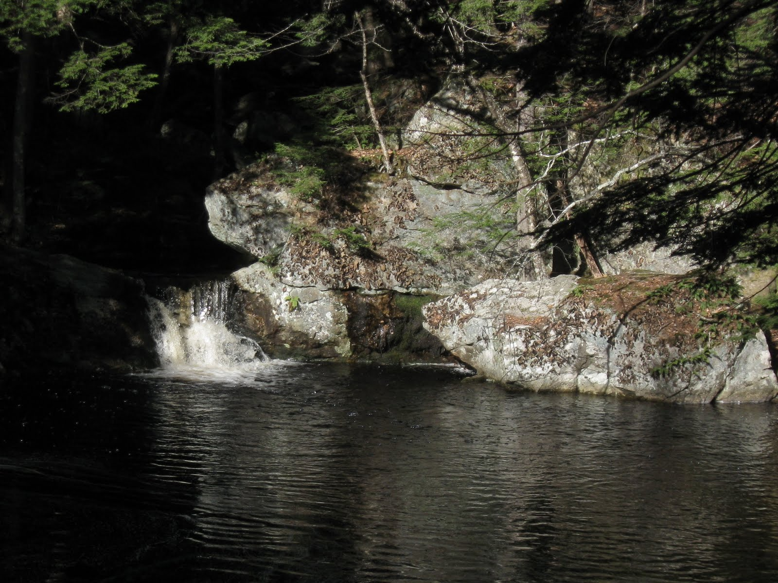 Birding north central massachusetts tully trail epic - Tully swimming pool opening hours ...