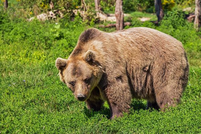 Worte mit Bär, Wörterliste mit Bär, Seniorenarbeit, Aktivierungsideen