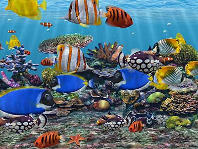 Aquarium live HD free