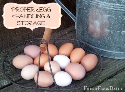 Proper Egg Handling and Storage | Fresh Eggs Daily®