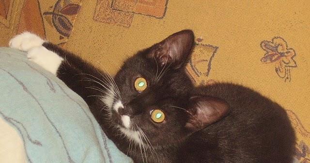 unsere haustiere katze ist zu d nn das kann beim aufp ppeln helfen. Black Bedroom Furniture Sets. Home Design Ideas