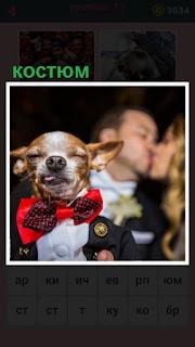 651 слов собака в мужском костюме и с бабочкой на шее 17 уровень
