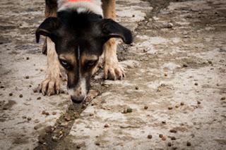 Διαχείριση των αδέσποτων ζώων και της κακοποίησης των ζώων συντροφιάς