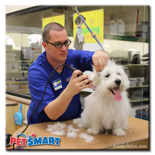 Male PetSmart Groomer shaving White West Highland Terrier