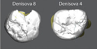 http://sciencythoughts.blogspot.co.uk/2015/12/genetic-data-from-two-new-denisovan.html