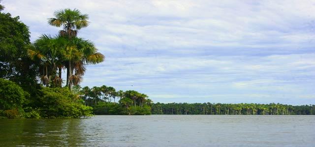 Lago Sandoval - Reserva Nacional Tambopata