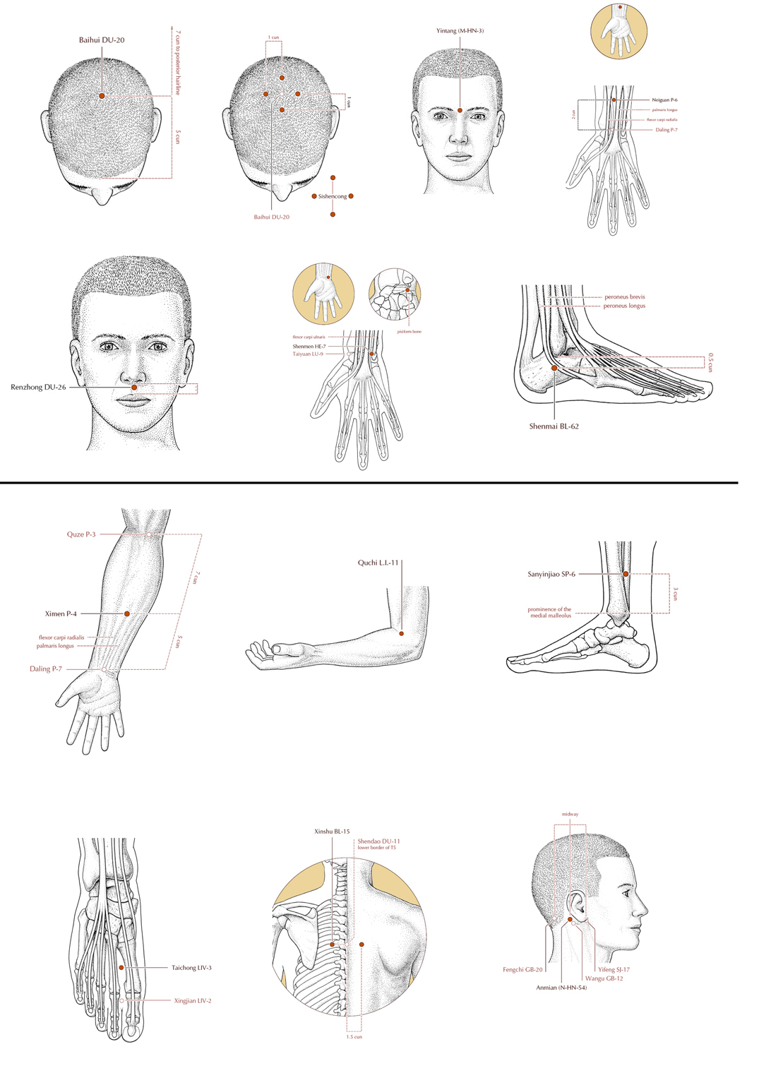 Acupuncture Masters Acupuncture Point Location For