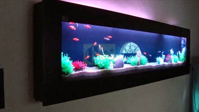 Aquarium suppliers in dubai