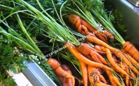 Organic Vegetable Farming Is Gaining Popularity In India Food Market One Of The Fastest Growing Business Because Shortage