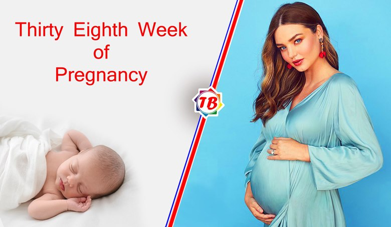 Thirty Eighth Week of Pregnancy