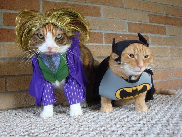 Batman and Joker cat costume pictures
