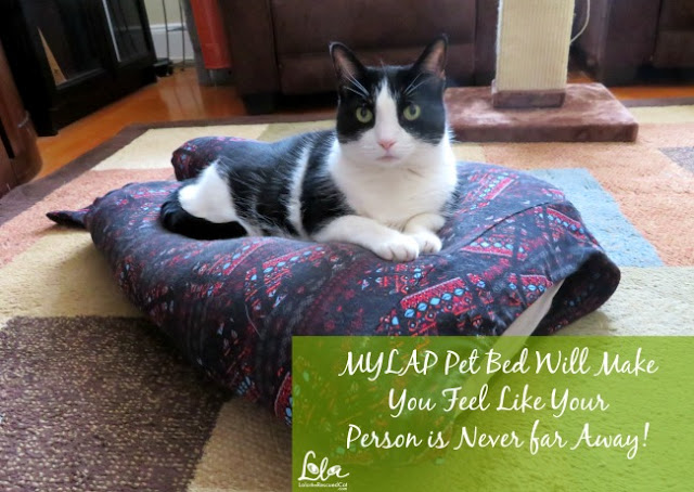 2018 review of Lola The Rescued Cat