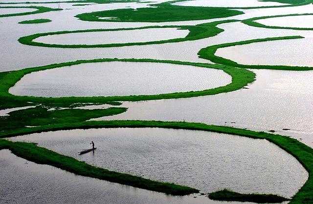 The phumdis of Loktak Lake, Manipur