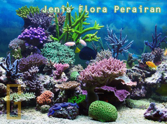 Jenis Tumbuhan (Flora) di Perairan