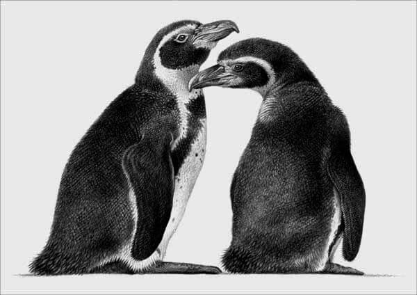 11-Penguins-Julie-Rhodes-Wildlife-Animals-Realistic-Pencil-Drawings-www-designstack-co