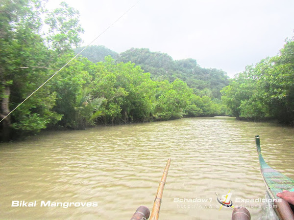 Barangay Bikal Mangrove - Caramoan Mapping Expedition - Schadow1 Expeditions