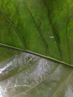 Proses pernapasan pada tumbuhan