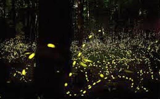 Luzes dos lampiros