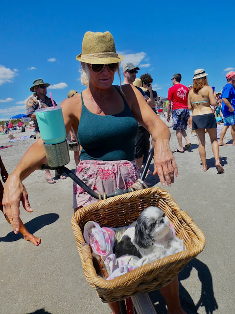 people and dog watching cocoa beach florida dog surfing championship