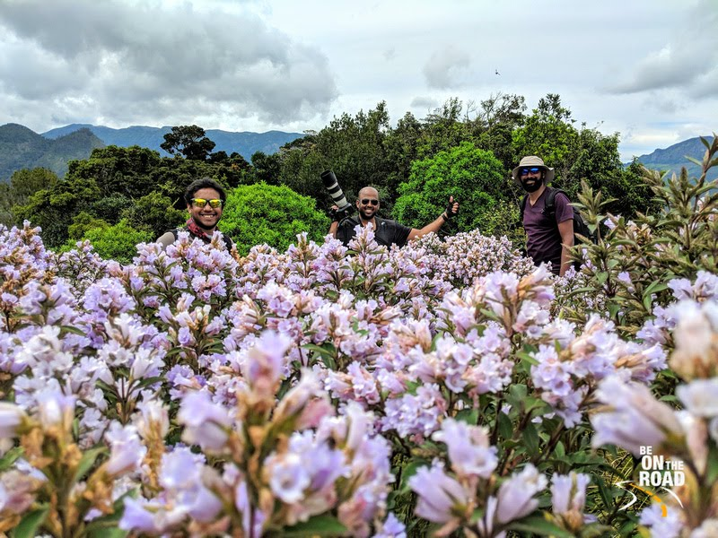 The boys have finally chased the Neelakurinji and this is at a place of a mass bloom