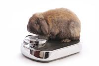 L'obésité chez les rongeurs