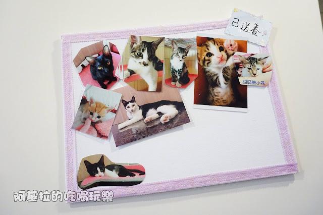 14615829 1099288356791075 5114284004684249357 o - 熱血採訪 朵貓貓咖啡館 - 貓咪餐廳