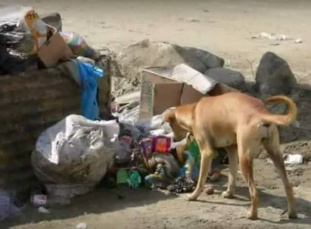Dog Saves Abandoned Newborn Baby Found In A Pile Of Garbage
