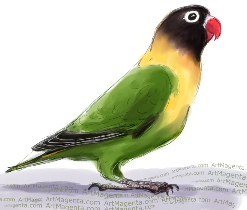 Masked Lovebird sketch painting. Bird art drawing by illustrator Artmagenta