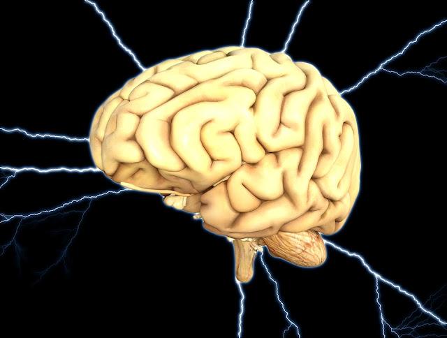 Fakta Menarik Tentang Otak Manusia Yang Belum Kamu Ketahui!