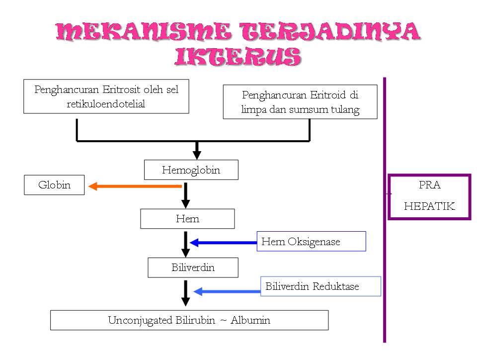 Etiologi dan Patogenesis Obesitas
