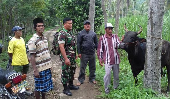 Salah satu sapi yang dicuri maling ditemukan