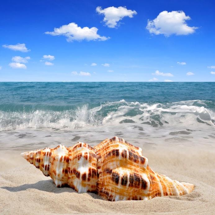 Sanibel Beach: Sanibel Fishing, Sanibel Island, FL: Shelling Trips