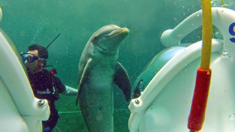 Dolphin TREK cruise excursion