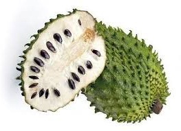 Guyabano Tree (Soursop) also Known as the Graviola Tree, a
