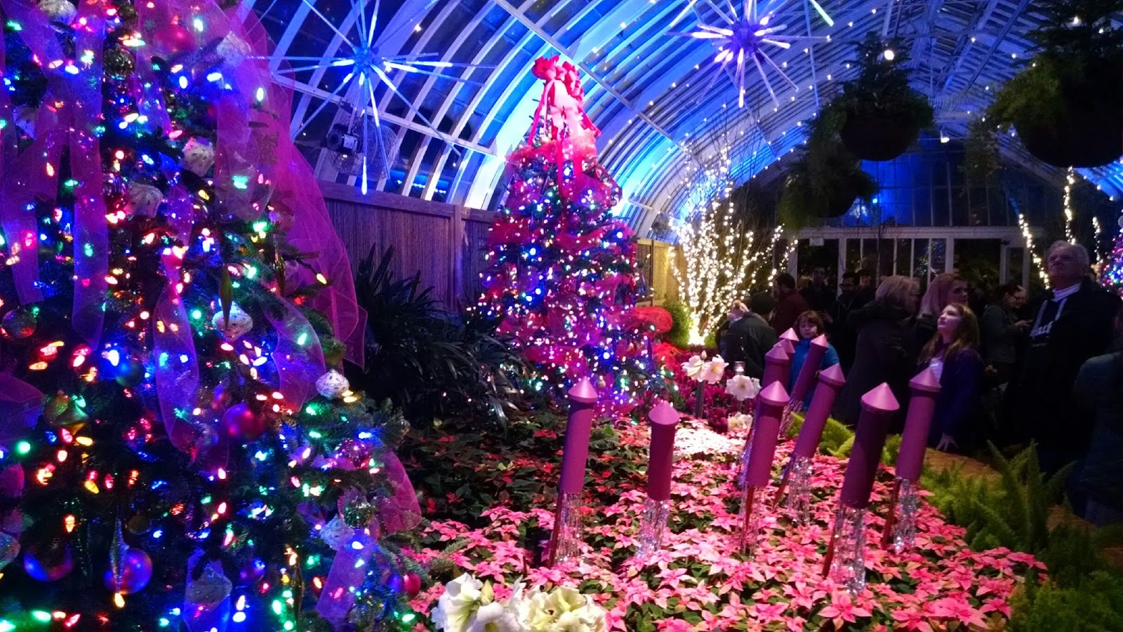 day 251 phipps conservatory wonder of the season new show new timed entry