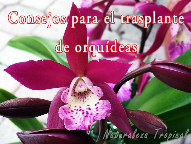 10 Consejos esenciales a tener en cuenta para trasplantar orquídeas