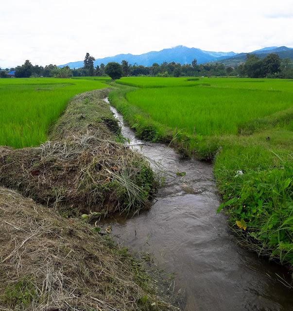 Pua Nan Thailand