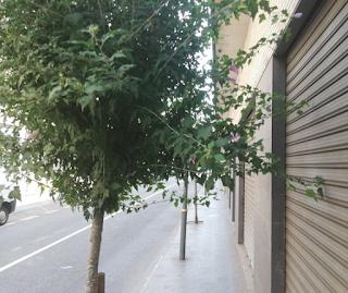 arbres sense podar al barri del port