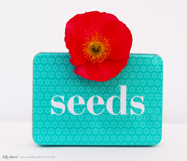 Iceland Poppy and Seed Tin