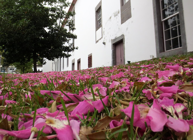 ground flowers in Colégio dos Jesuítas