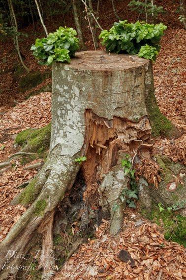 September 2018 Wenn die Wurzel lebt, gedeiht und spriesst neues Grün auch ohne den grossen Rest. Mikrokosmos, Nährstoffe, Feuchtigkeit - die Grundlage für das Wachstum liegt im Boden