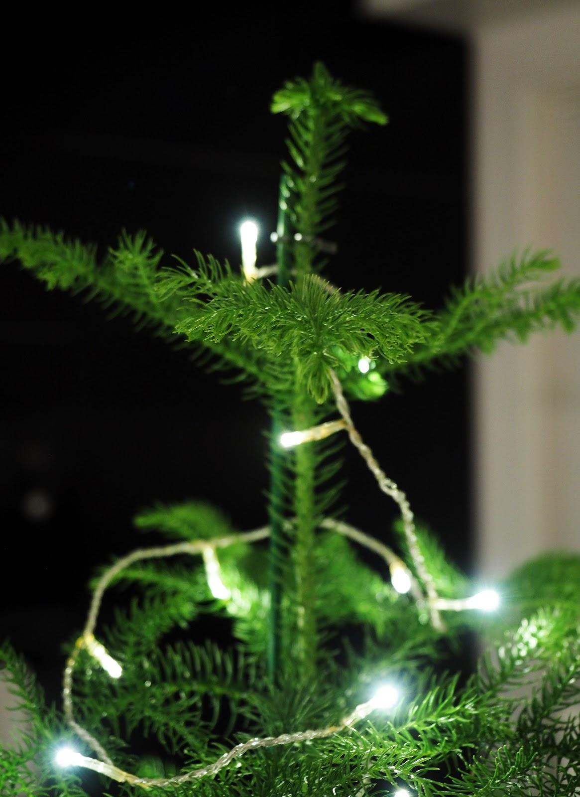 huonekuusi ja jouluvalot