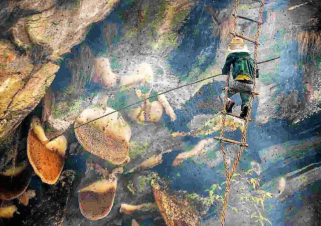 recolector de miel en Nepal