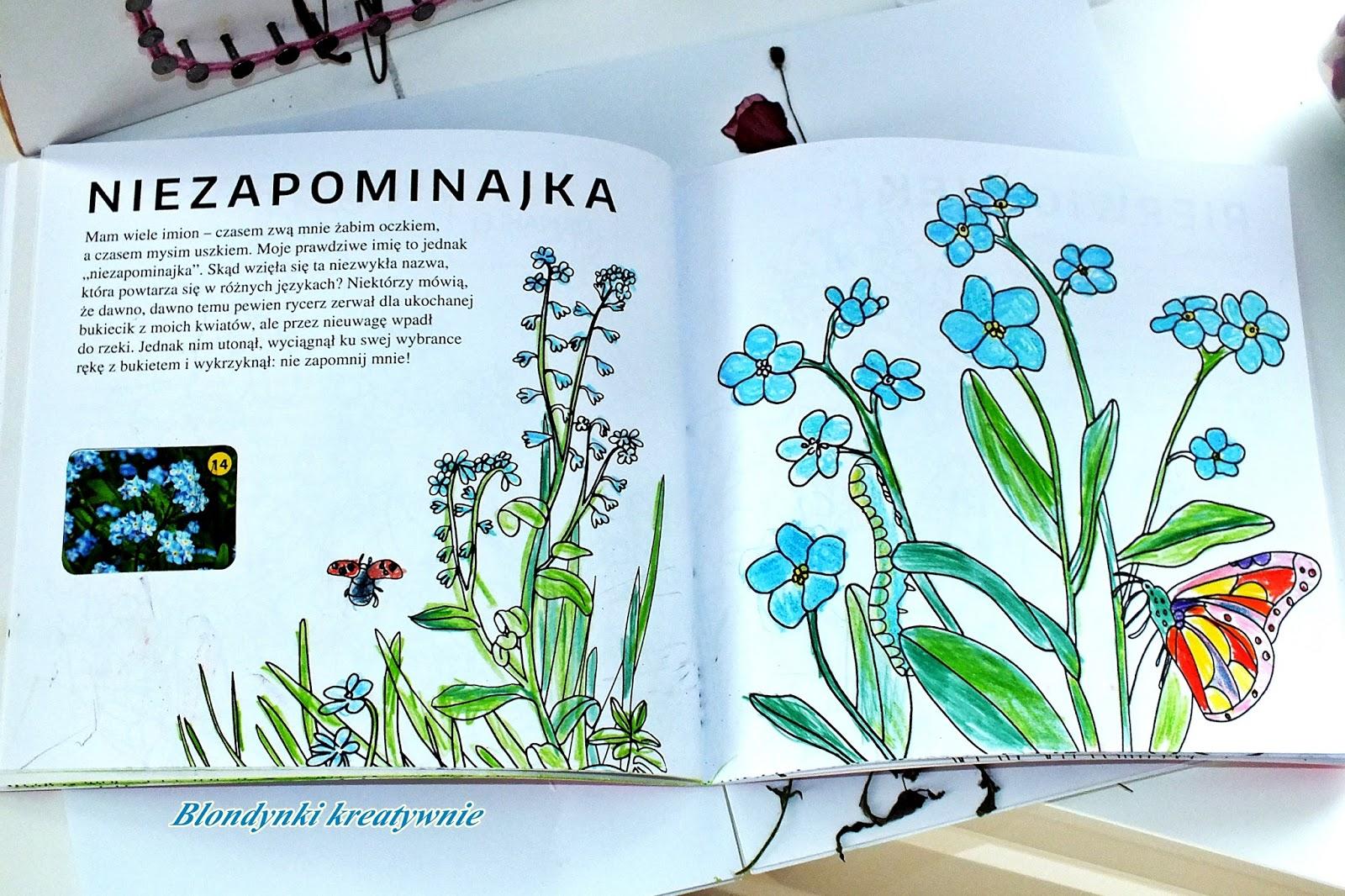 Kolorowa Edukacja Kwiaty Polski Blondynki Kreatywnie