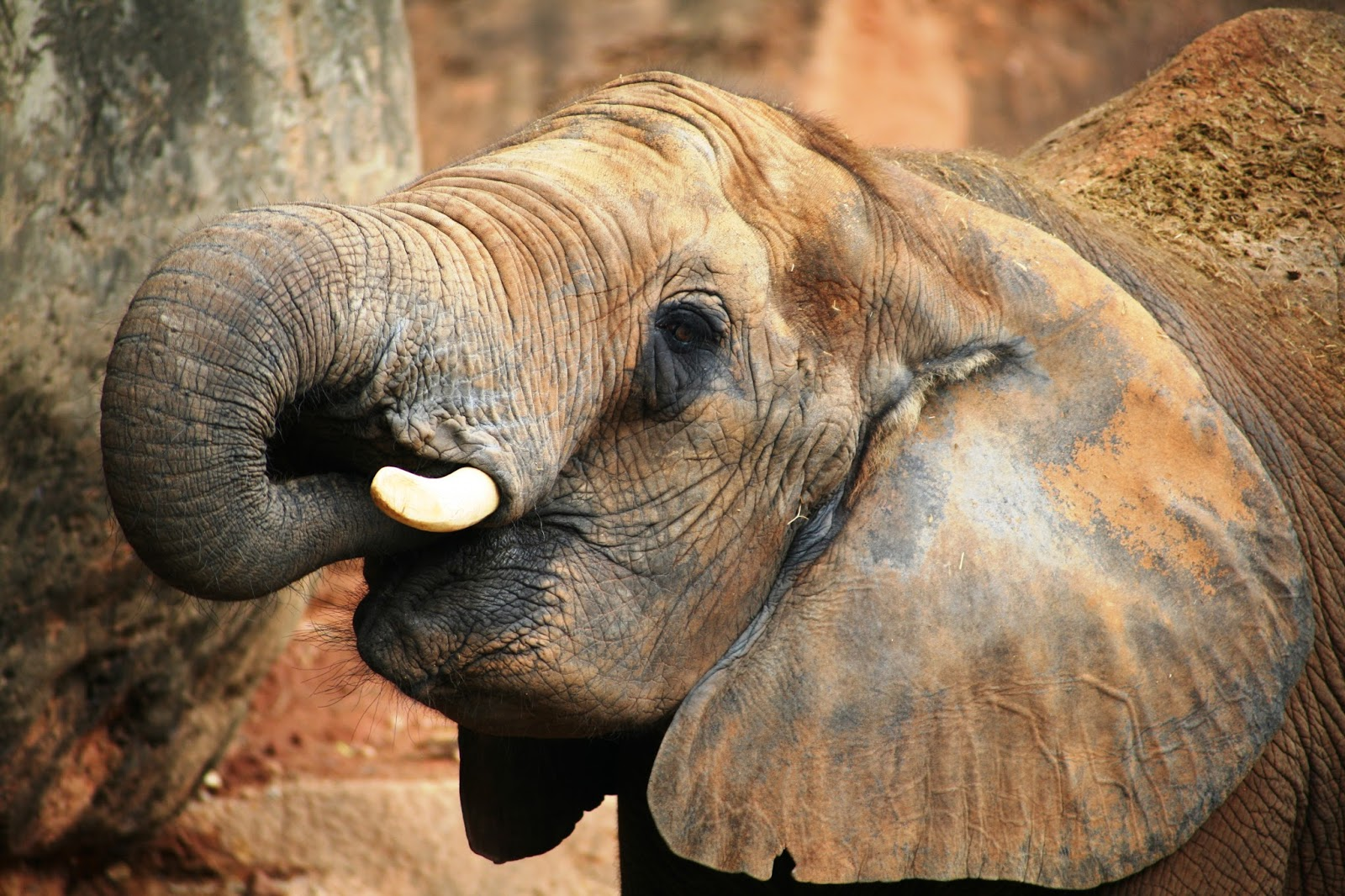 Trunk Length and Other Curious Facts about Elephants 38