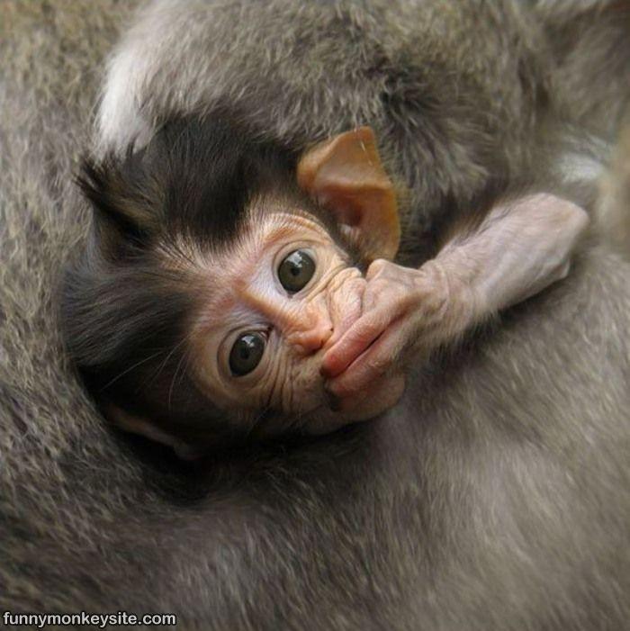 hilarious monkeys - photo #9